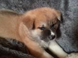 Vorsicht Hundebesitzer: Staupe in zwei Fällen im Rhein-Neckar-Kreis nachgewiesen