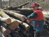 Kreisforstamt: Kampf den Holzdieben