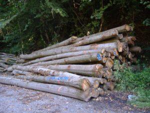7915-brennholz-polderholz