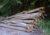 Kreisforstamt: Brennholz weiterhin stark nachgefragt – Preise bleiben stabil