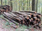 Eichenbrennholz besser als sein Ruf – Nach richtiger Ablagerung hoher Brennwert
