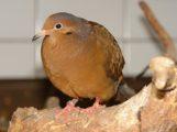 Zoo Heidelberg sorgt sich um seine Vögel – Schutzmaßnahmen eingeleitet