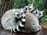 Affenlauf 2017: Mach' dich fit für den Zoo – Spendenlauf für neues Kattagehege