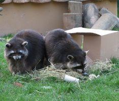 Den Zoo entdecken – auch hinter den Kulissen: Am kommenden Sonntag